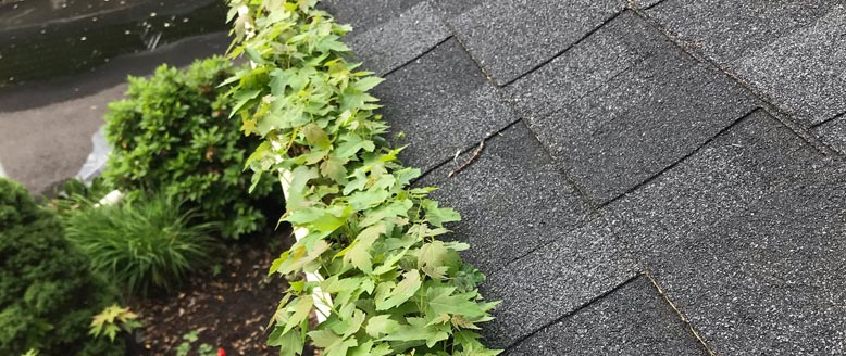 Plants Growing in Gutters