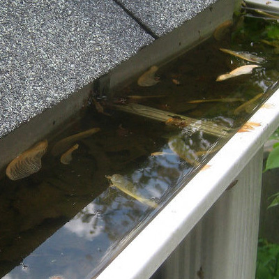 Roof Leak Clogged Gutters